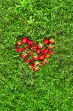 Sur l'herbe verte selon l'opinion du coeur a étendu l'endroit rouge de fraise pour la configuration d'appartement d'inscription Photos libres de droits