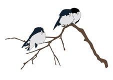 Sur la branche d'un arbre reposant 3 oiseaux Image stock