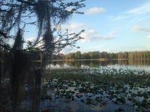 Sur la côte de nature de la Floride Photos libres de droits
