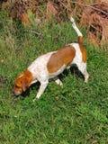 Sur la chasse Image stock