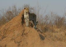 Sur la chasse Photographie stock