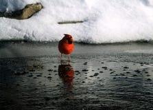 Sur la glace mince Images libres de droits