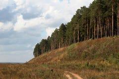 Sur la nature près de la forêt Photographie stock libre de droits