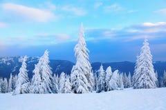 Sur la pelouse couverte de neige Photo stock