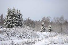 Sur la petite clairière les fourrure-arbres se développent Images libres de droits