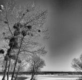 Sur la plage Regard artistique en noir et blanc Images libres de droits
