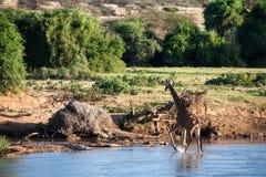 Sur la rivière Photo libre de droits
