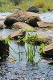 Sur la rivière pendant le jour ensoleillé Photographie stock libre de droits