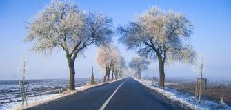 Sur la route avec les arbres congelés Photo libre de droits