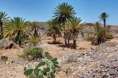 Sur la route de Mirleft - le Maroc Images libres de droits