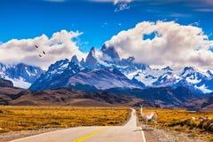 Sur la route est le guanaco gracieux Photo libre de droits