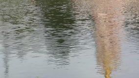Sur la surface de l'eau banque de vidéos