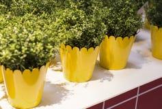 sur la table blanche sont les pots de fleur jaunes photo stock