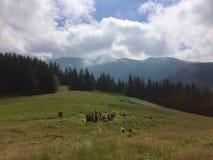 Sur la traînée dans les montagnes images libres de droits