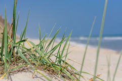 Sur la végétation de bord de la mer Image libre de droits