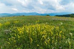 Sur le champ, les fleurs et les fleurs fleurissent dans différentes couleurs Vous pouvez sélectionner un bouquet à votre amie Image libre de droits