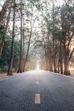 Sur le chemin avec la route droite en bois de pin de matin de lever de soleil Photos stock