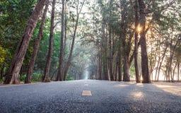 Sur le chemin avec la route droite en bois de pin de matin de lever de soleil Images libres de droits