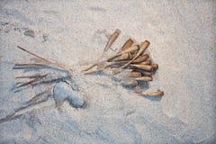 Sur le coeur de pavots de sable Photos libres de droits