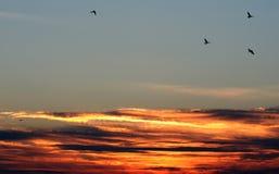 Sur le coucher du soleil d'aile photos stock