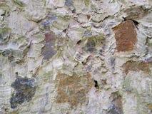 Sur le fond est un mur des pierres images libres de droits