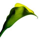 Sur le fond jaune d'isolement Image stock