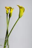 Sur le fond jaune d'isolement Photographie stock libre de droits