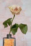 sur le fond s'est fané le blanc sale de rose Photographie stock