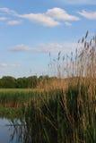Sur le lac Photo stock