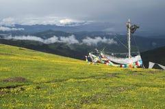 Sur le pré de haute montagne Photographie stock libre de droits