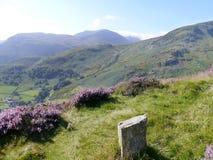 Sur le rebord herbeux de montagne avec le courrier et la bruyère Photos stock