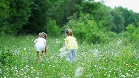 Sur le vert, la pelouse de camomille, enfants fonctionnent autour avec des filets, essai pour attraper des papillons, sauterelles clips vidéos