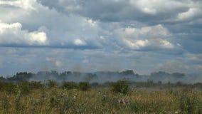 Sur les brûlures agricoles d'herbe sèche de champ banque de vidéos