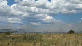 Sur les brûlures agricoles d'herbe sèche de champ clips vidéos