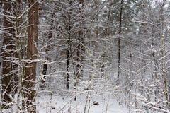 Sur les branches noires de l'arbre se trouve une couche épaisse de lo de neige Photo libre de droits