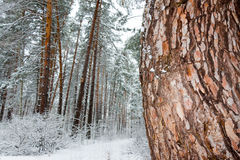 Sur les branches noires de l'arbre se trouve une couche épaisse de lo de neige Photo stock