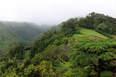 Sur les collines vertes le brouillard descend Île de San Miguel Image stock
