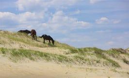Sur les dunes photo libre de droits