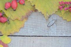 Sur les feuilles d'automne de vieux conseils et les baies colorées cynorrhodon et berbéris images stock