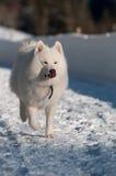Sur un journal de neige Photographie stock libre de droits