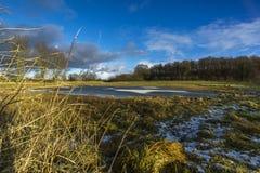 Sur un pré avec un étang moitié-congelé 2 Photo stock