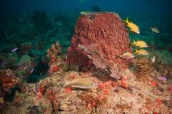 Sur un récif coralien dans l'Océan Atlantique Image stock