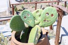 Sur un smiley de sourire de jour ensoleillé de cactus Image stock