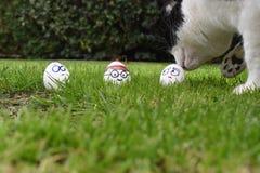 Sur une chasse à oeuf de pâques, cachée dans l'herbe est où est Waldo, photographie stock libre de droits