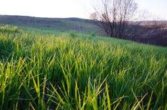 Sur une pelouse verte le matin brumeux tôt Image stock