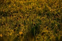 Sur une pelouse verte le matin brumeux tôt Image libre de droits