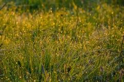 Sur une pelouse verte le matin brumeux tôt Photo stock
