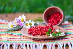 Sur une serviette tient la cuvette en bois et une tasse avec les fraisiers communs Image libre de droits