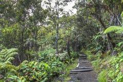 Sur une traînée de jungle en Volcano National Park, Hawaï Photo libre de droits