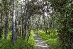 Sur une traînée de jungle en Volcano National Park, Hawaï Photos stock
